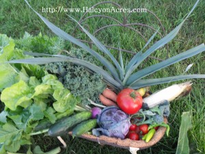 organic produce from Halcyon Acres