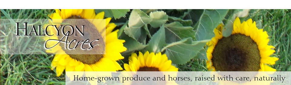 Sunflower seeds are some of the unusual chemical-free, Roanoke local offerings at Halcyon Acres